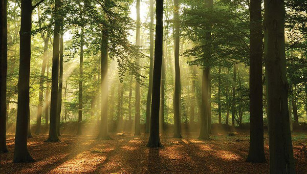 лес01