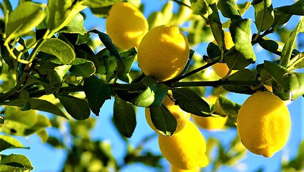 limonarij tropicheskij raj zaporozhya glav 01