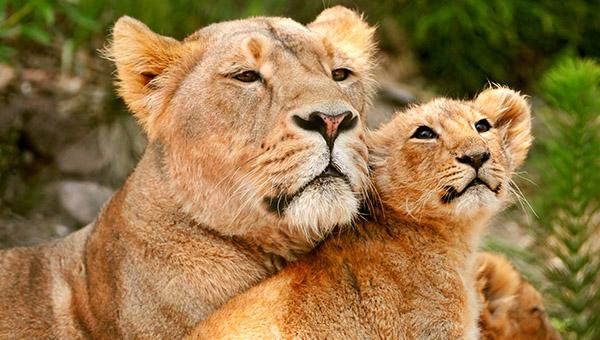 chastnyj zoopark khishchnikov zamok popova panskoe ozero glav